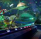 The Oceanarium
